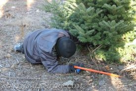 Quincy Hadlock cutting down this years tree